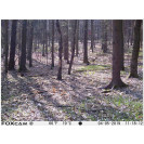 FOXcam Forester 940nm